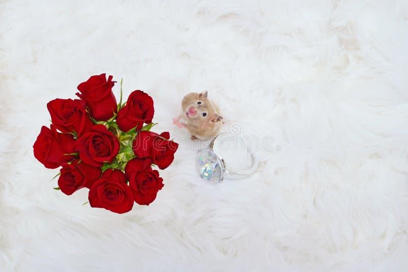 与玫瑰和巨型圆环的仓鼠 免版税库存照片