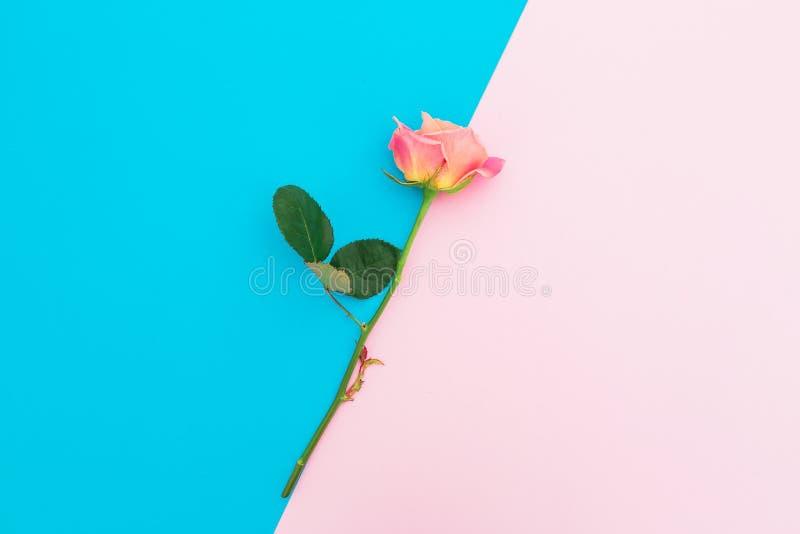 与玫瑰的蓝色和桃红色淡色背景开花 艺术构成 平的位置 顶视图 库存照片