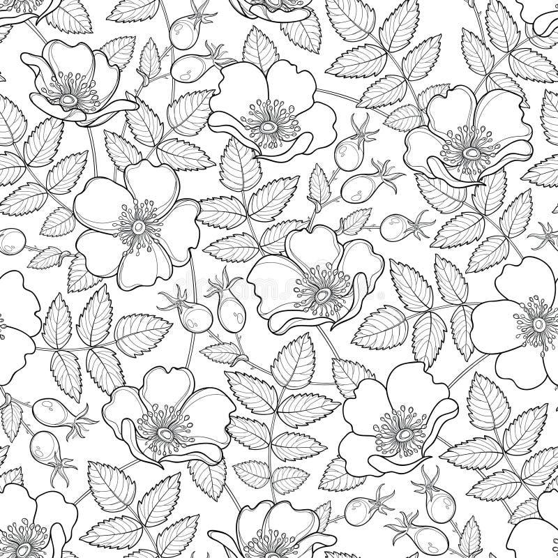 与玫瑰色概述的狗的传染媒介无缝的样式或罗莎canina 花、臀部和叶子在白色背景 野玫瑰果样式 库存例证
