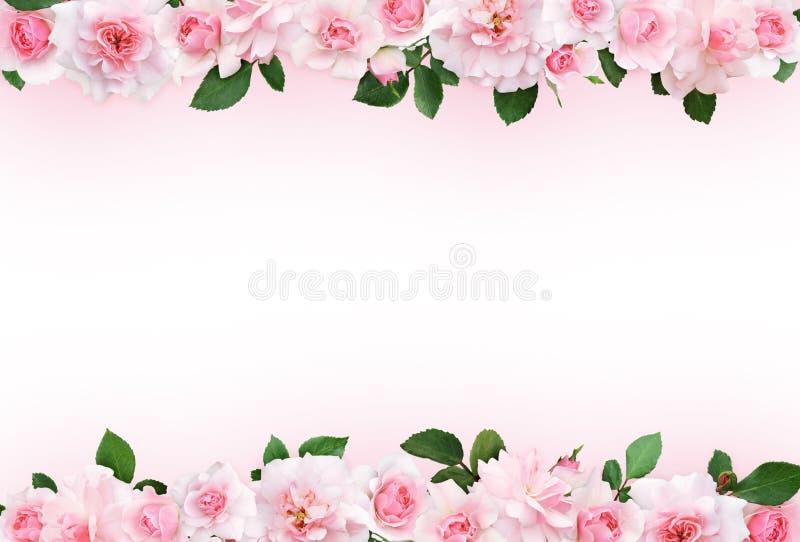 与玫瑰色花和叶子的桃红色背景 库存例证