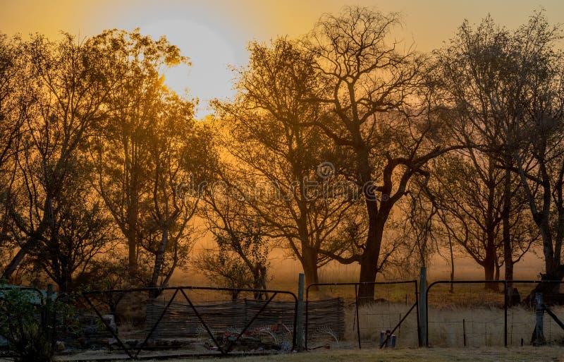 与现出轮廓的树被隔绝的图象的日落为背景使用 库存照片