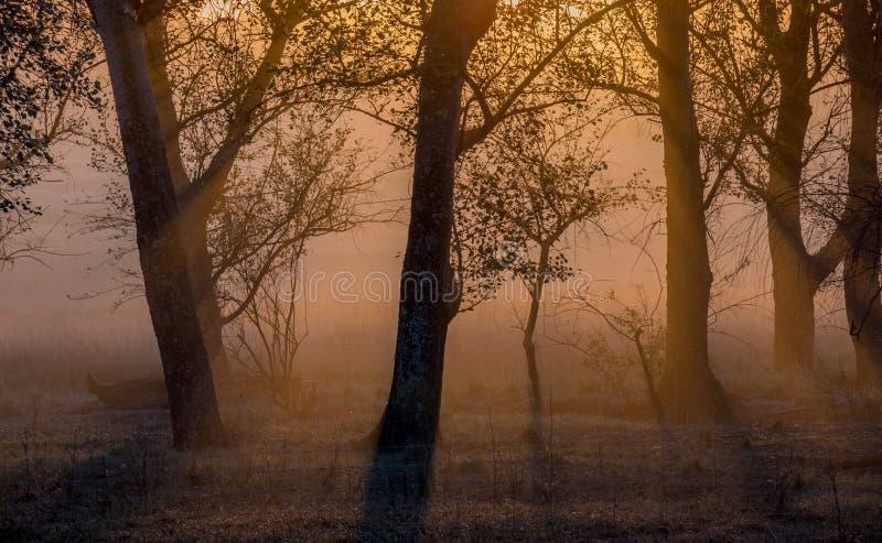 与现出轮廓的树被隔绝的图象的日落为背景使用 免版税图库摄影