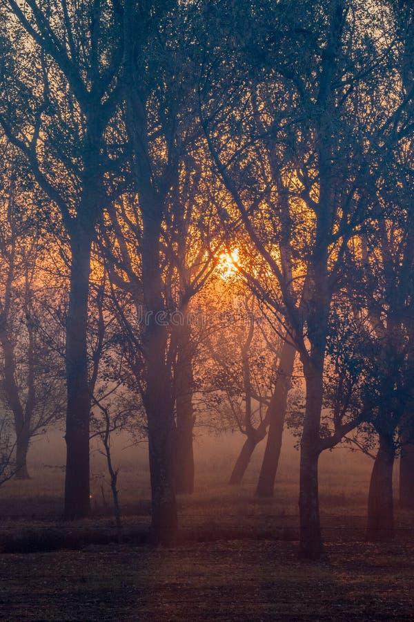 与现出轮廓的树被隔绝的图象的日落为背景使用 免版税库存图片