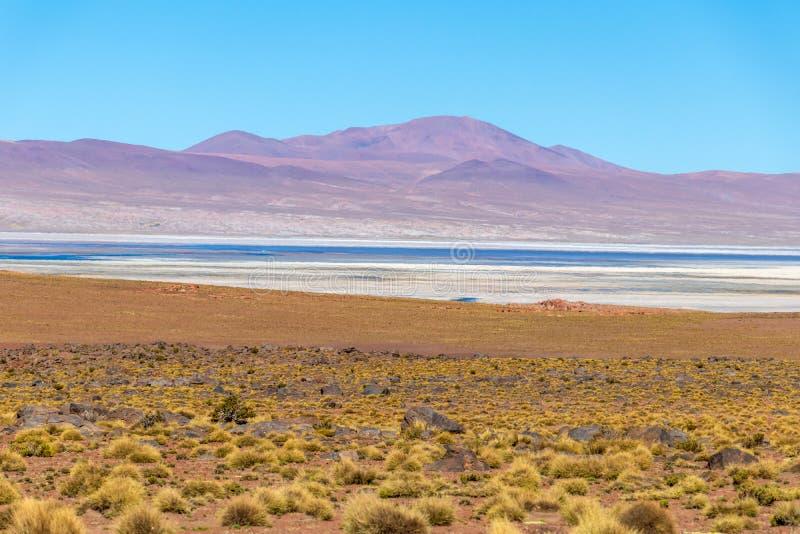与玻利维亚人阿尔蒂普拉诺高原风景的被弄脏的背景  免版税库存图片
