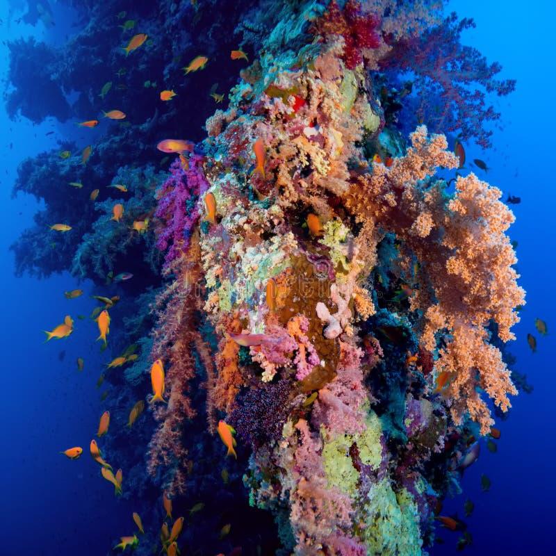 与珊瑚和海绵的五颜六色的水下的礁石 免版税库存照片
