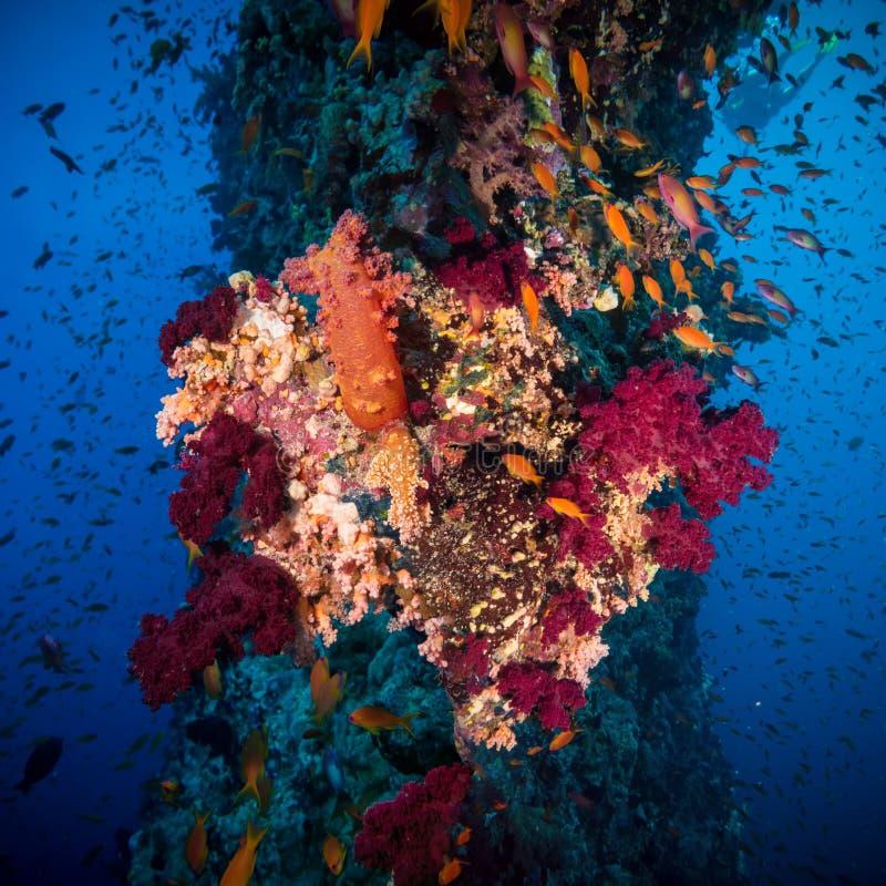 与珊瑚和海绵的五颜六色的水下的礁石 免版税图库摄影