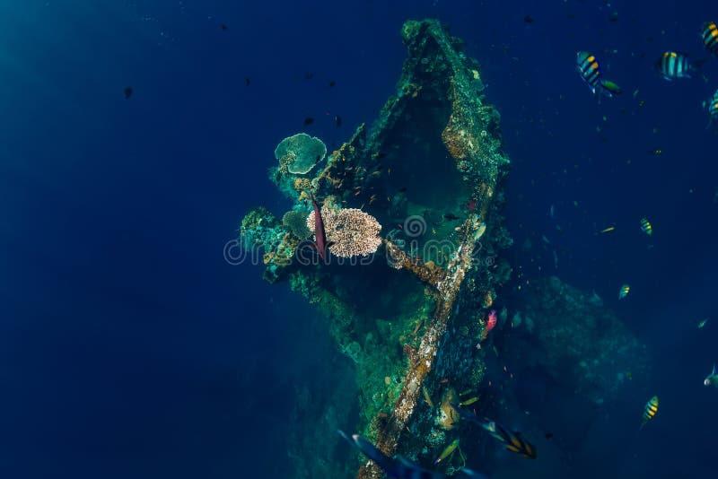 与珊瑚和热带鱼的美丽的水下的世界 USS利伯蒂 库存照片