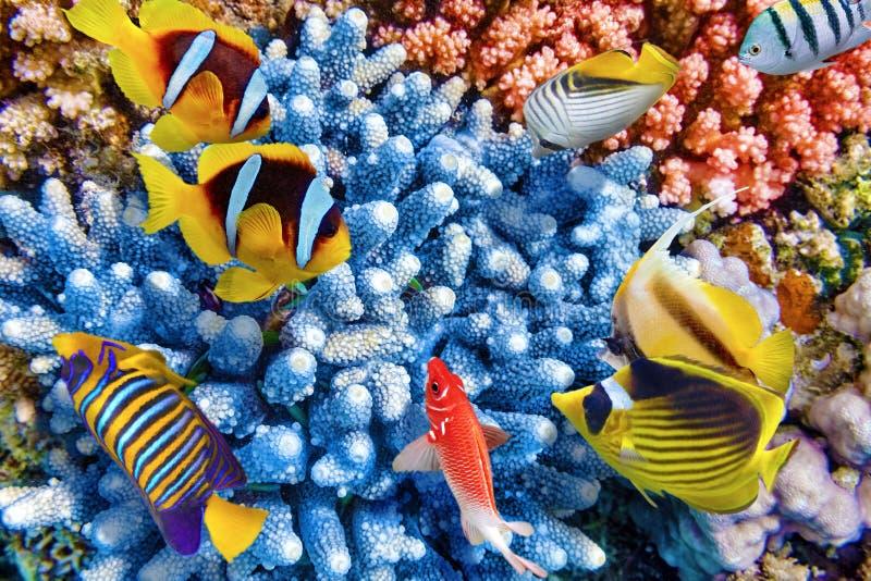 与珊瑚和热带鱼的水下的世界 免版税库存照片