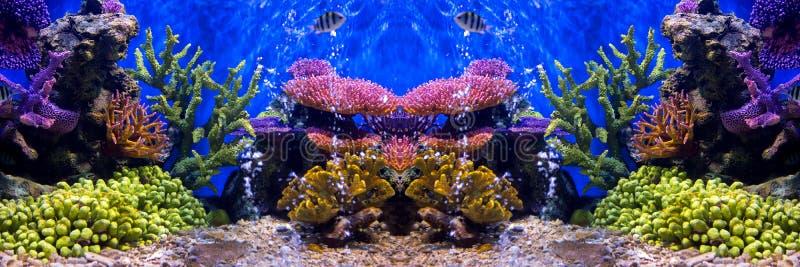 与珊瑚和水生动物的水族馆鱼 免版税库存照片