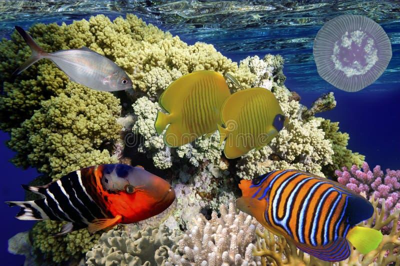 与珊瑚和tropica的美妙和美丽的水下的世界 库存图片