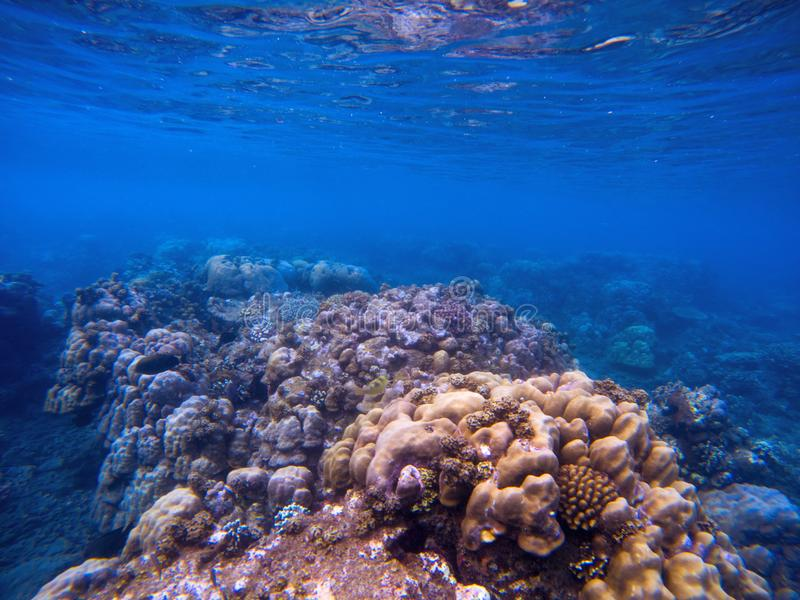 与珊瑚墙壁的水下的风景 与海动植物的珊瑚生态系 库存图片