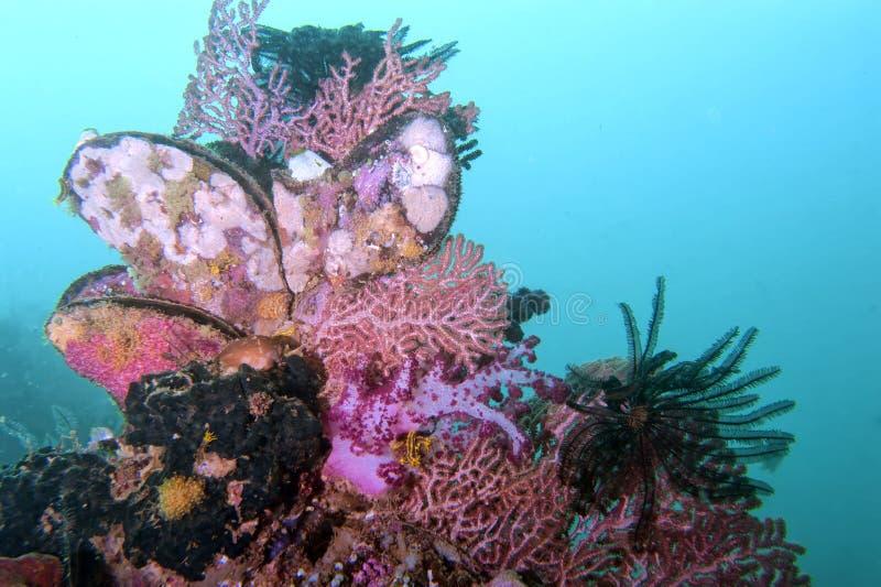 与珊瑚的五颜六色的水下的风景 免版税图库摄影