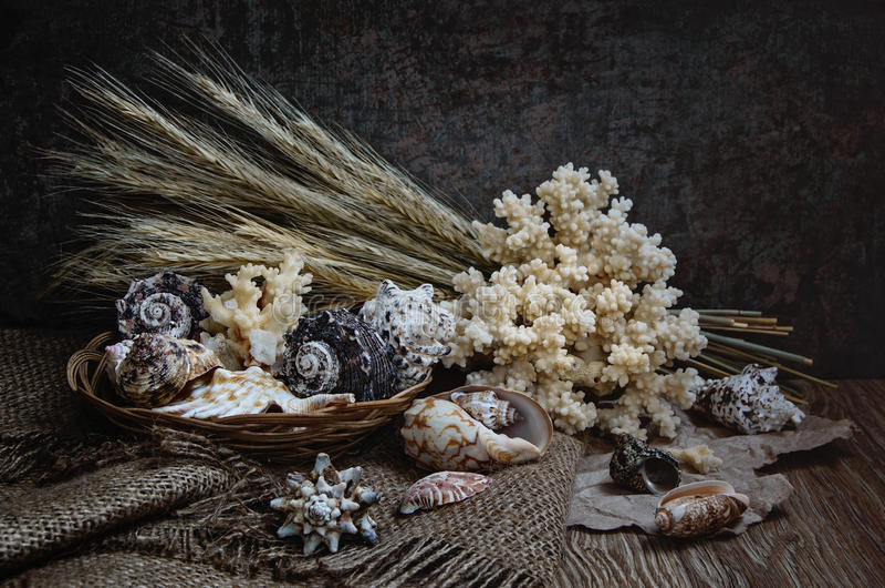 与珊瑚的贝壳 图库摄影