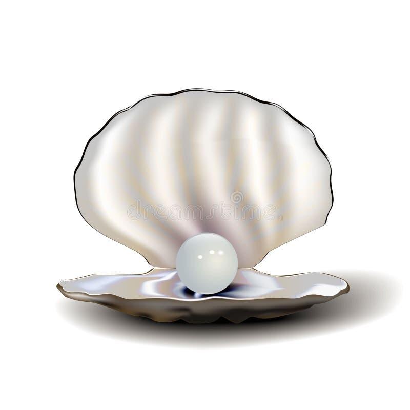 与珍珠和阴影的现实真珠色的壳,隔绝在白色背景 皇族释放例证