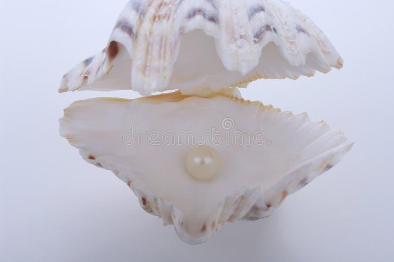 与珍珠的壳 库存照片