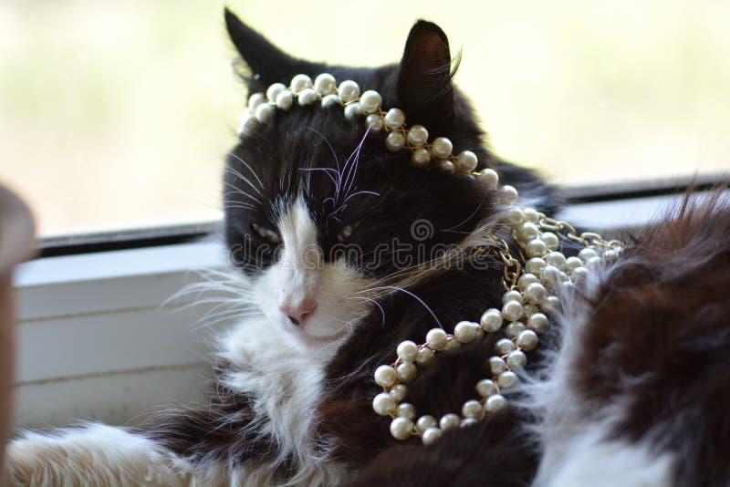 与珍珠装饰的黑白猫 库存照片