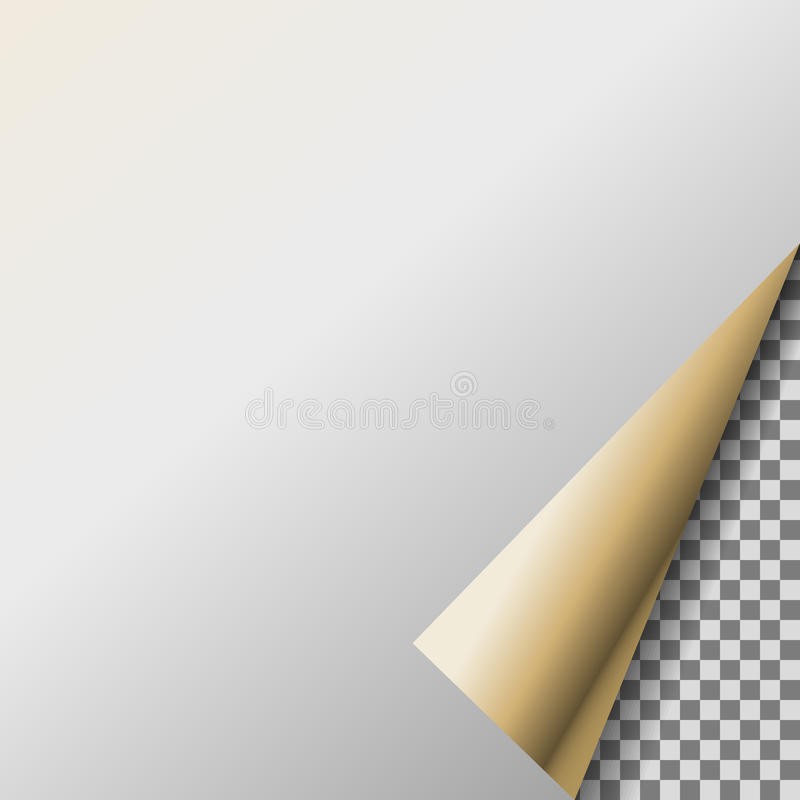 与珍珠透明角落的页卷毛 向量例证