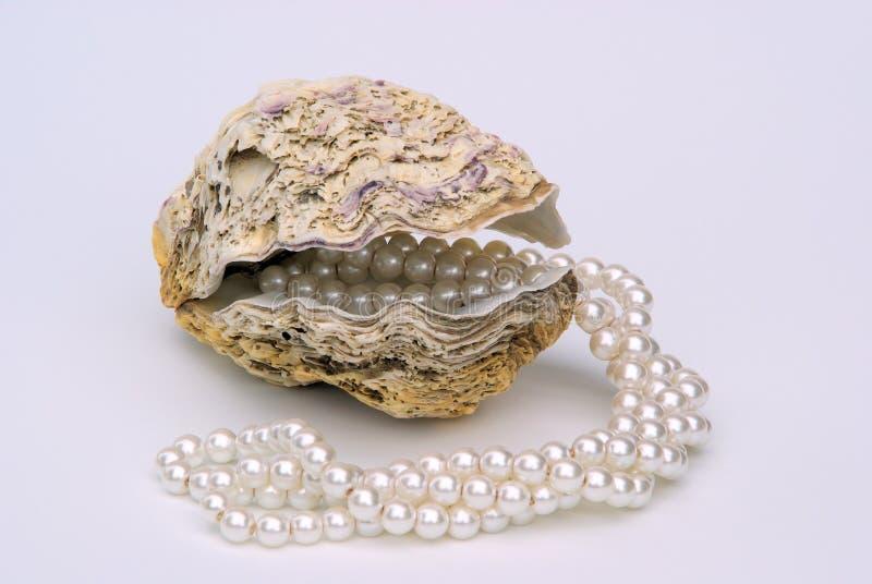 与珍珠necklet的牡蛎 免版税库存照片
