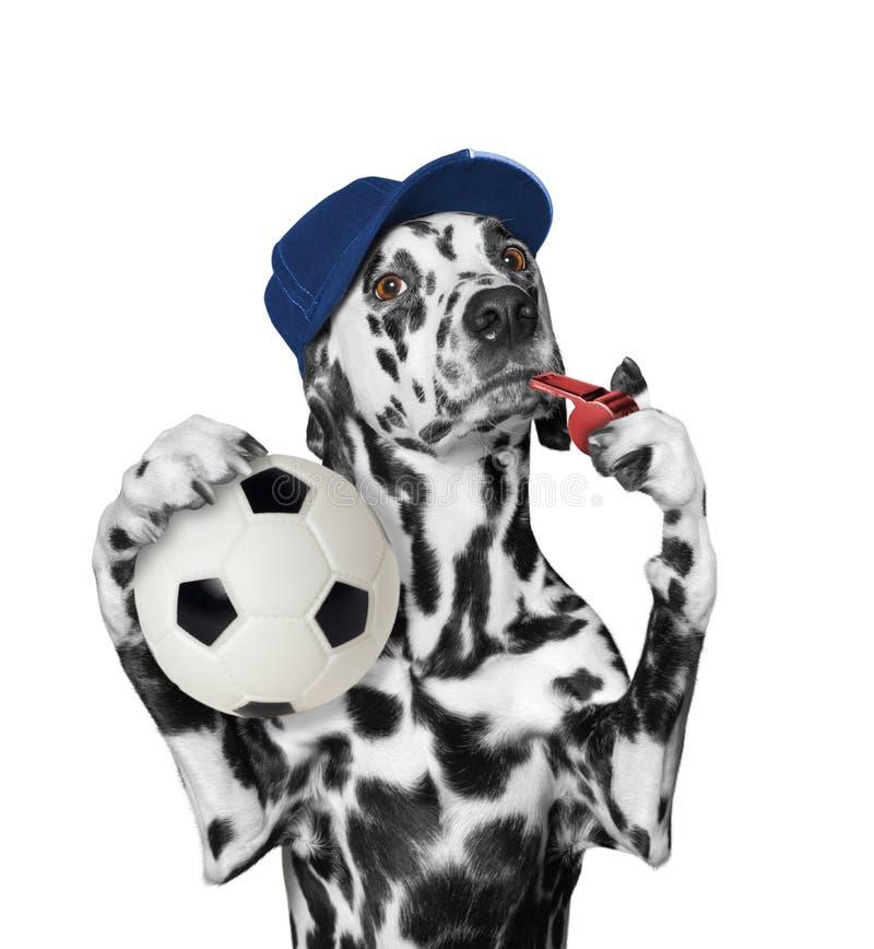 与球和口哨的狗 免版税库存图片