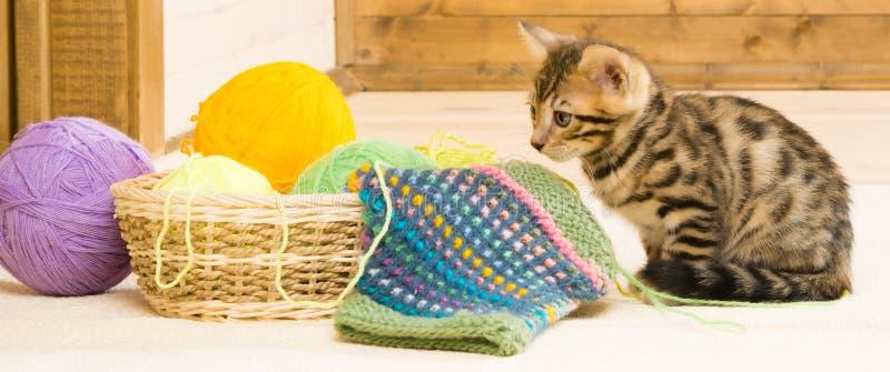 与球的篮子在木的小猫的 免版税库存图片