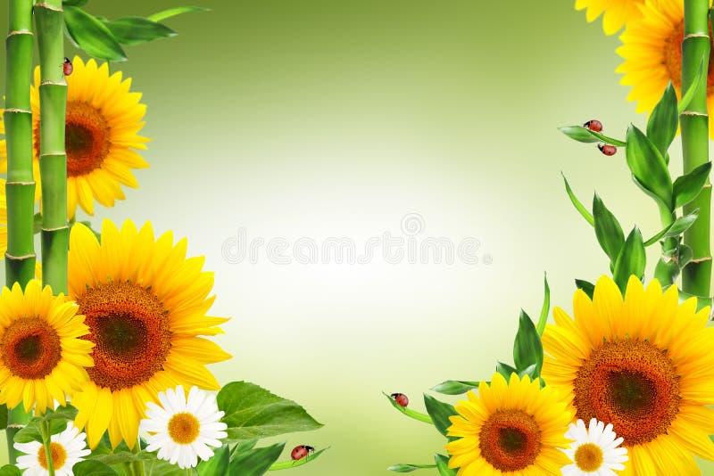 与瓢虫的春天花卉背景 皇族释放例证
