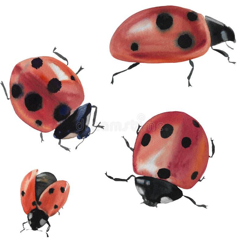与瓢虫的汇集 在白色背景隔绝的昆虫的例证 设计的瓢虫 库存例证