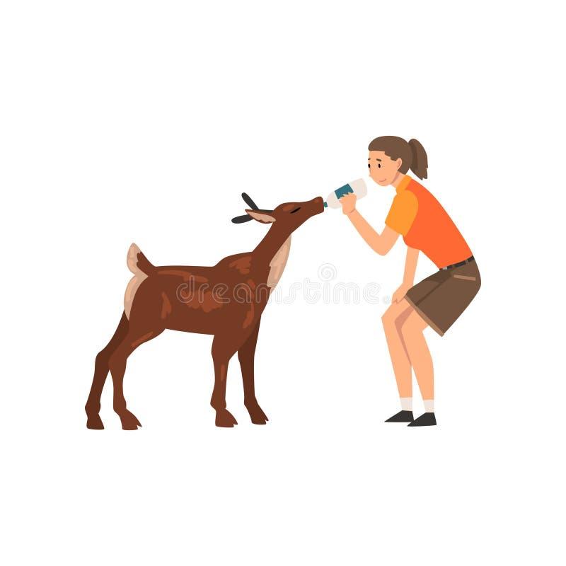 与瓶的女孩动物园工作者哺养的小鹿牛奶,专业动物园管理员字符关心动物传染媒介 向量例证