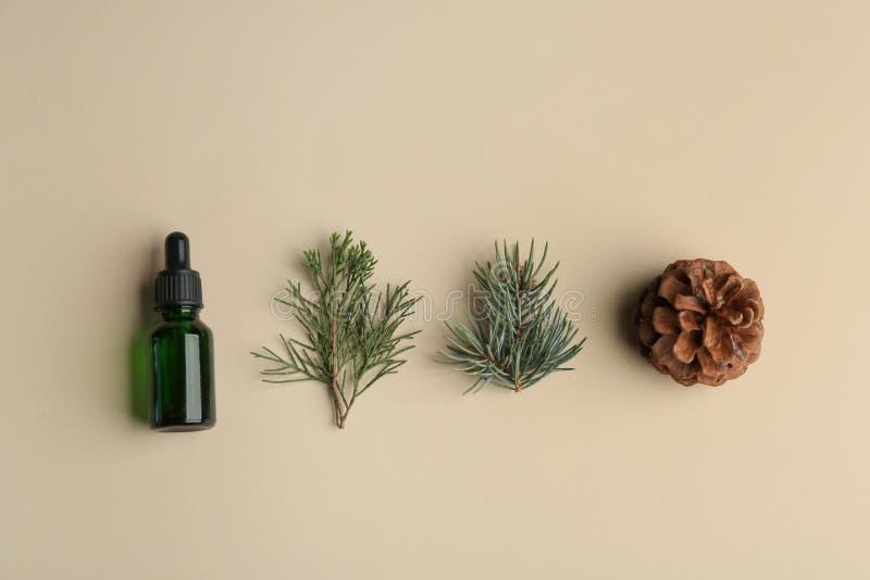 与瓶的平的被放置的构成精油和杉木分支 库存照片