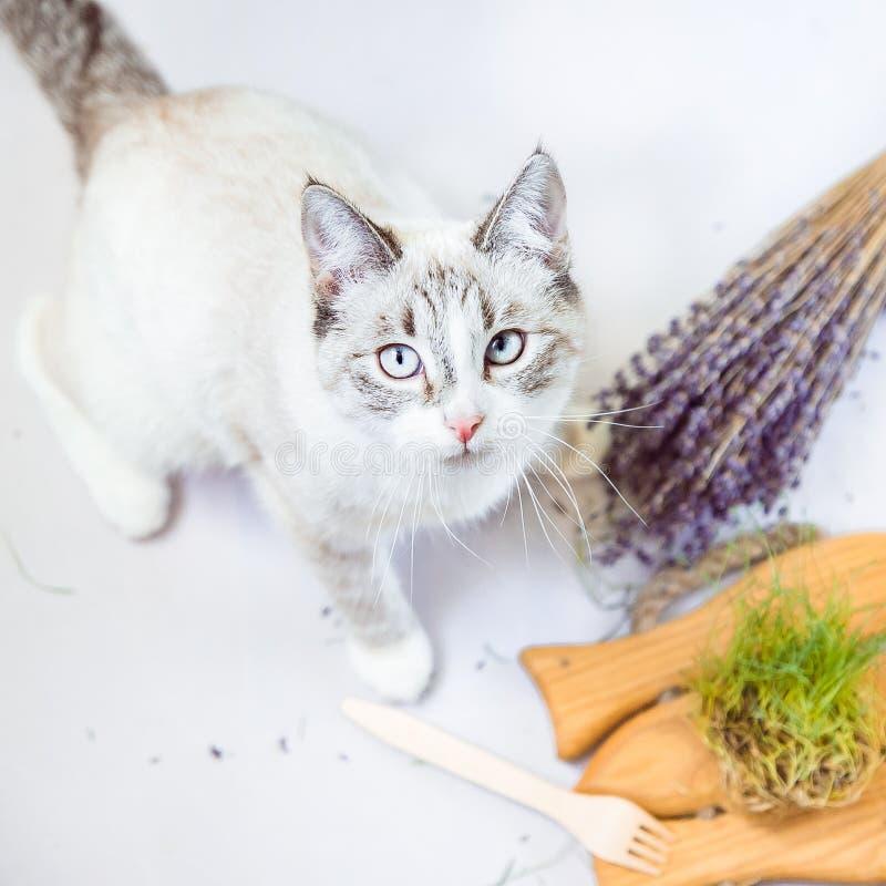 与生态一次性碗筷的逗人喜爱的猫生活方式画象 库存图片