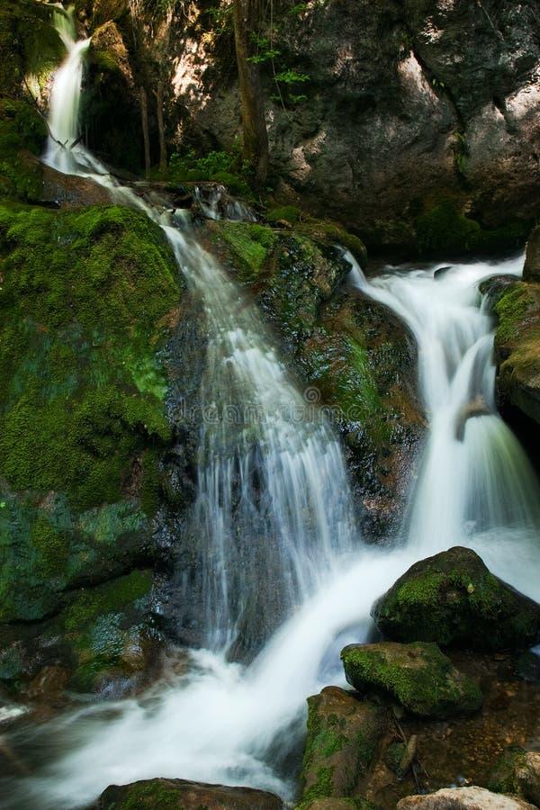 与生苔岩石的级联在森林里 库存图片