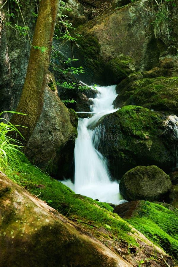 与生苔岩石的级联在森林里 免版税库存照片