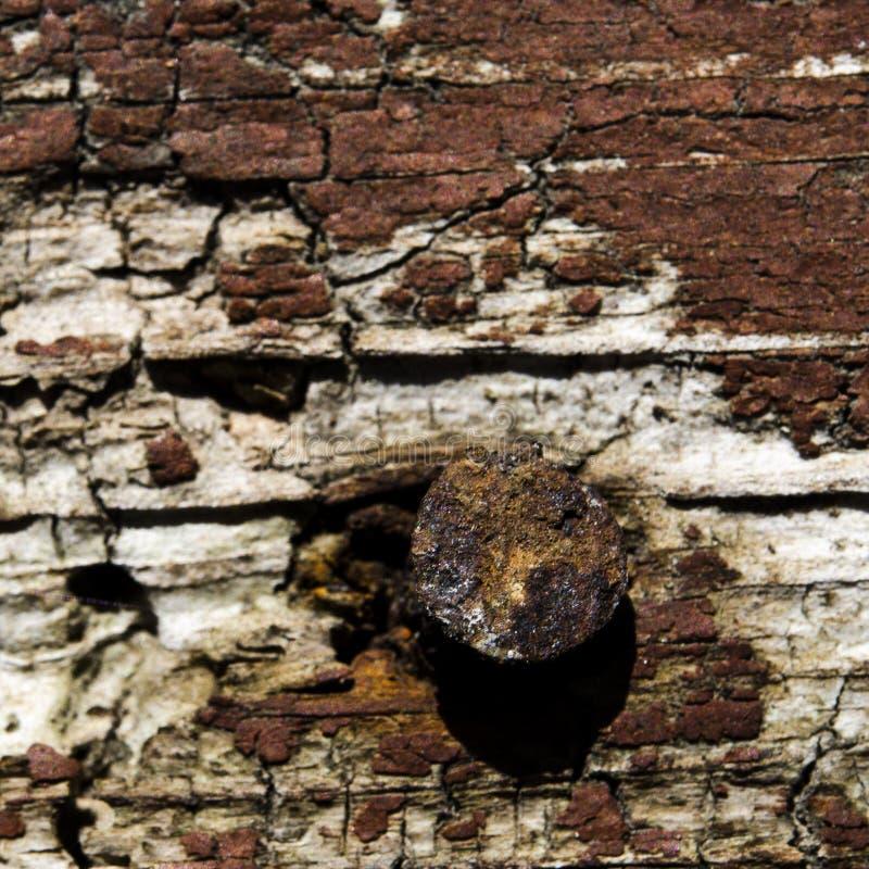 与生锈的钉子的老棕色木背景 库存图片