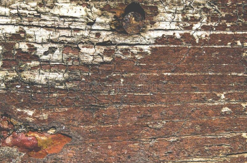 与生锈的钉子的老棕色木背景 免版税库存图片