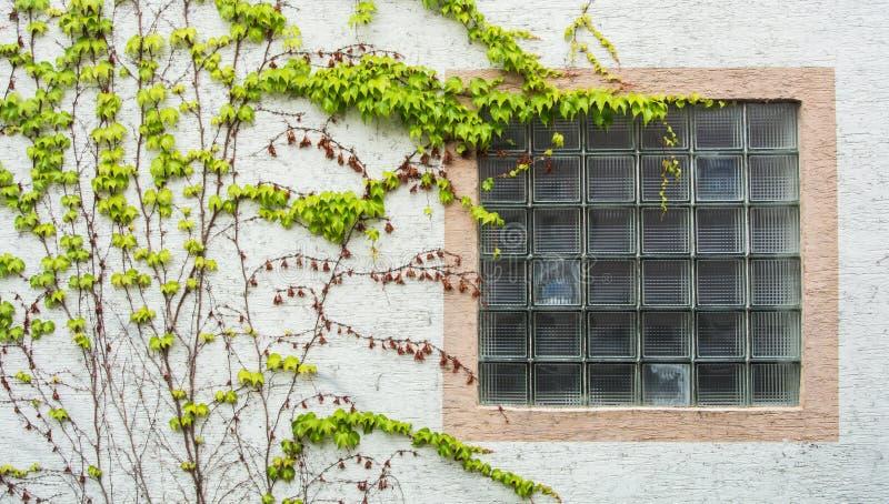 与用葡萄盖的格子的老窗口离开,一个minimalistic看法与白色织地不很细墙壁背景 免版税库存图片