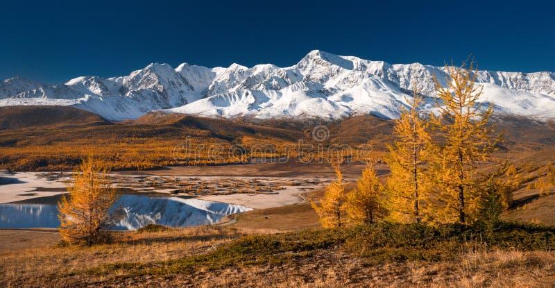 与用雪、森林、黄色落叶松属和美丽的湖盖的山的明亮的美丽如画的秋天风景有反射的 免版税库存图片