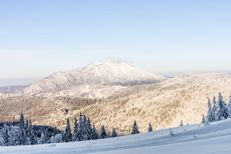 与用雪和山的冬天风景盖的树 库存照片