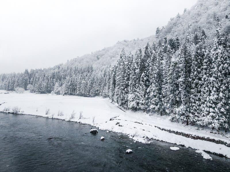 与用雪盖的冷杉木的可爱的冬天风景在河附近 免版税图库摄影