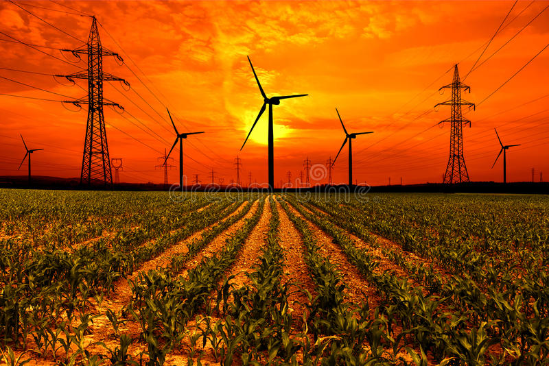 与电定向塔和风轮机的麦地在日落 免版税库存图片