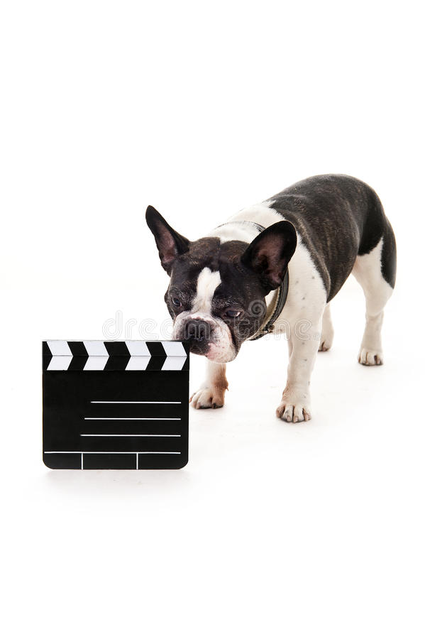 Download 与电影拍手的狗 库存照片. 图片 包括有 幽默, 查出, 滑稽, 复制, pedicured, 国内, 逗人喜爱 - 30339058