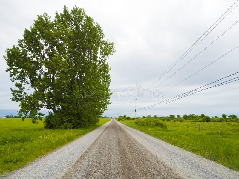 与电话输电线和一棵大树的贫瘠石渣路风景 免版税库存照片