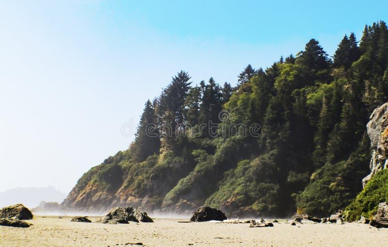 与疏散冰砾的有雾的海滩和树盖了峭壁 免版税库存图片