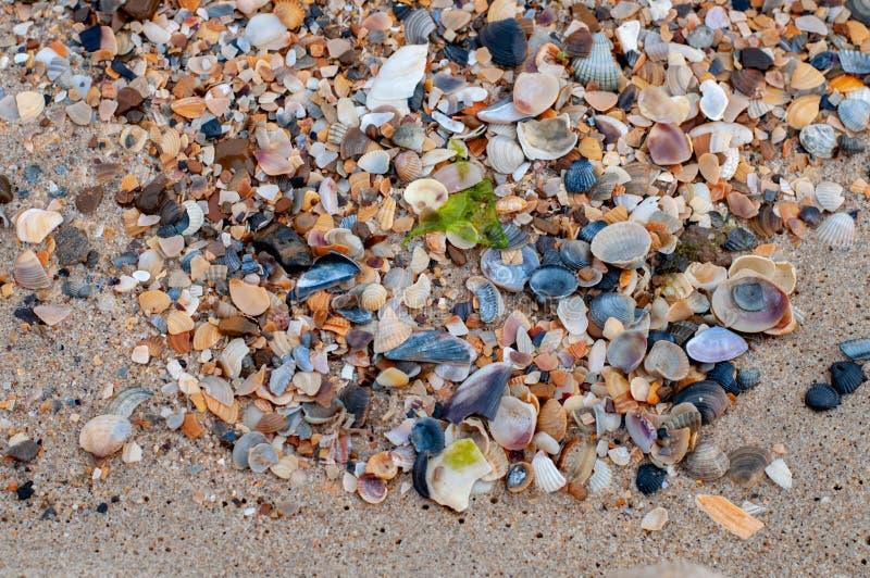 与疏散壳和小五颜六色的小卵石的海滩湿沙子 免版税库存图片