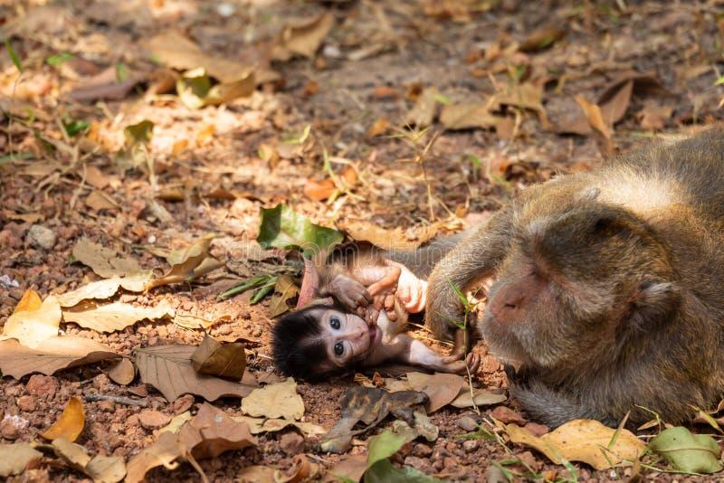 与疯狂的发型的新生儿猿 图库摄影