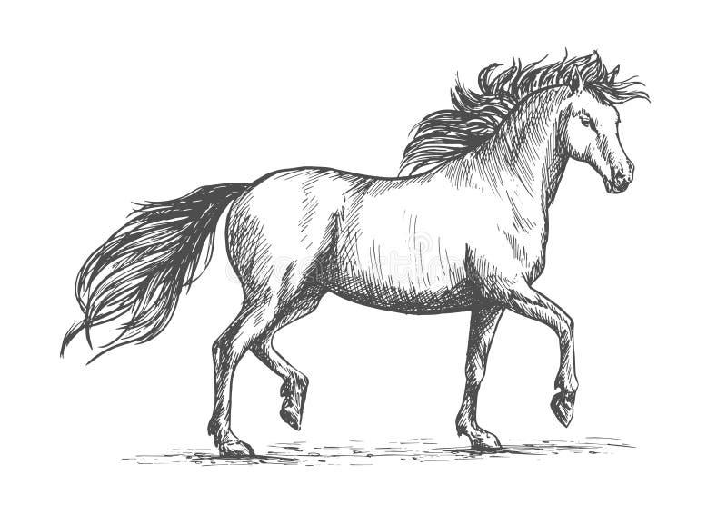 与疾驰阿拉伯赛马的马剪影 皇族释放例证