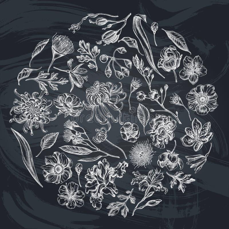 与白垩日本菊花,黑莓百合,玉树花,银莲花属,虹膜japonica的圆的花卉设计 皇族释放例证