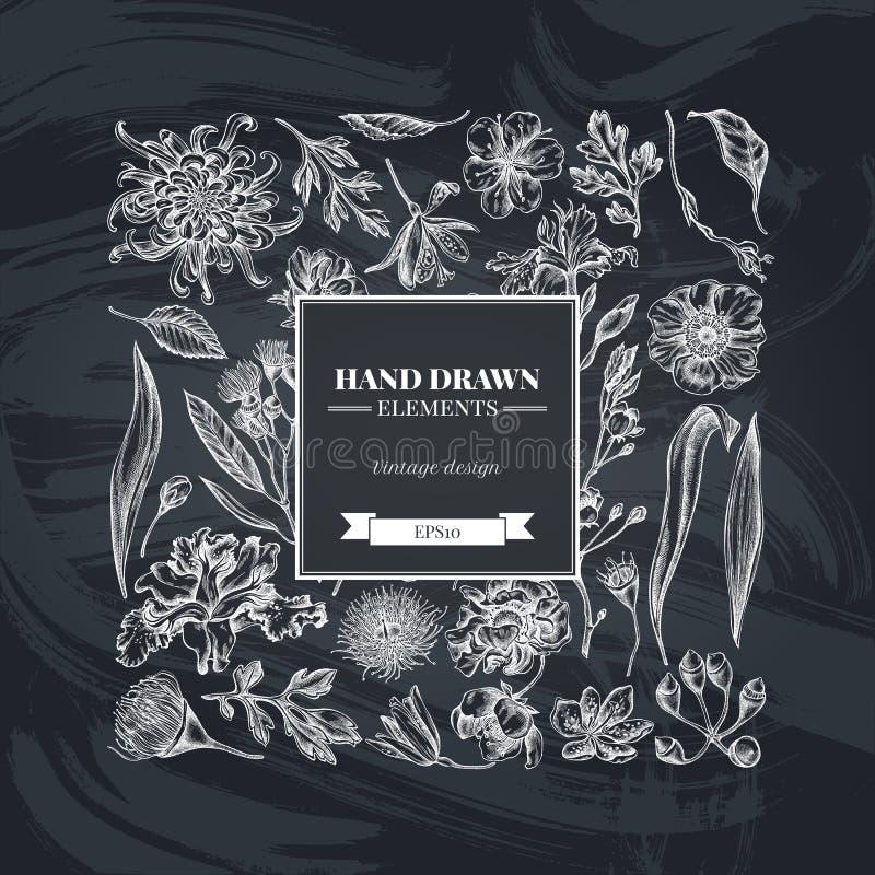 与白垩日本菊花,黑莓百合,玉树花,银莲花属,虹膜japonica的正方形花卉设计 向量例证