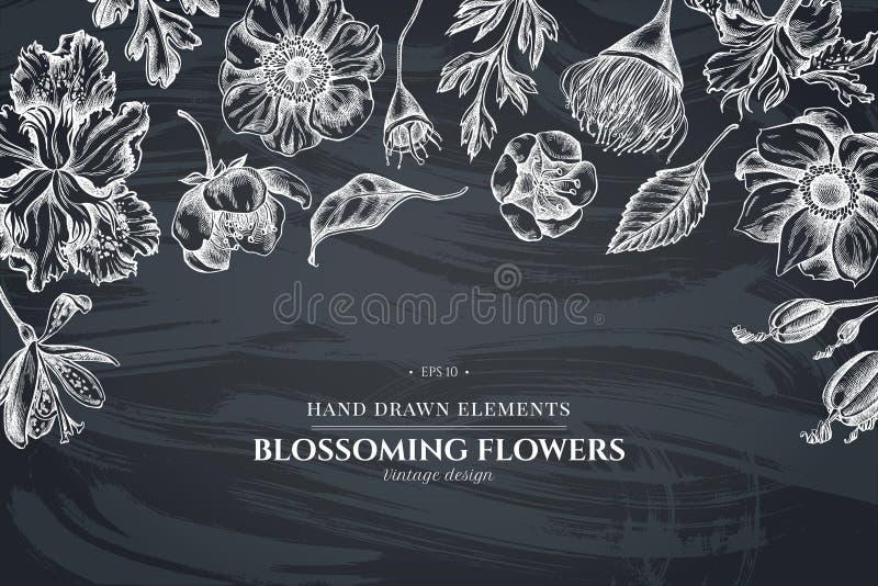 与白垩日本菊花,黑莓百合,玉树花,银莲花属,虹膜japonica,佐仓的花卉设计 向量例证