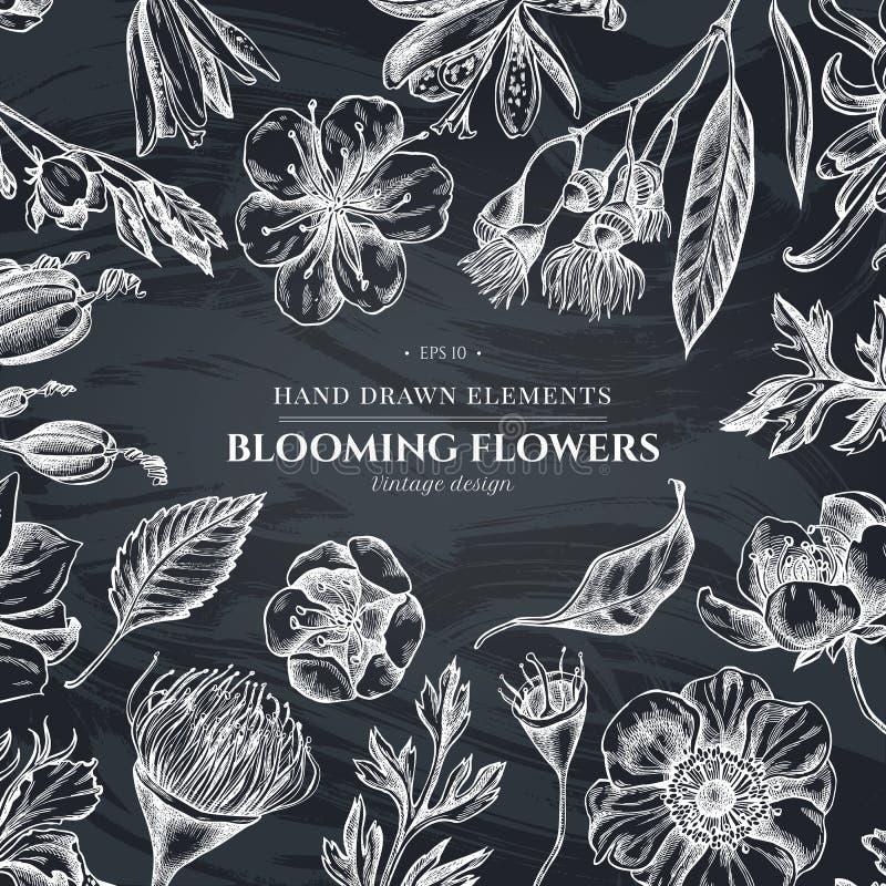 与白垩日本菊花,黑莓百合,玉树花,银莲花属,虹膜japonica,佐仓的花卉设计 库存例证