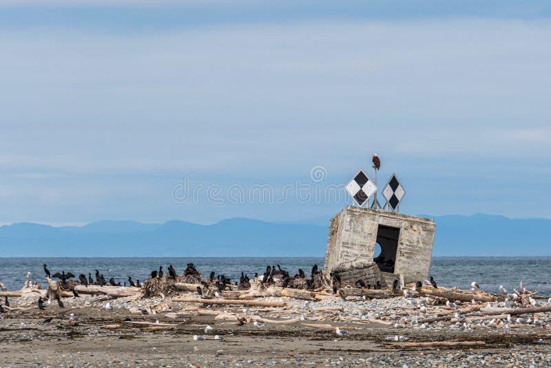 与白头鹰的黑白金刚石形状航海标志坐上面,史密斯岛,圣胡安海岛,安静半岛  库存图片