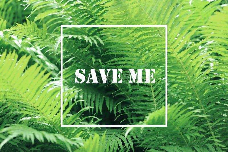 与白方块框架的绿草背景 库存图片